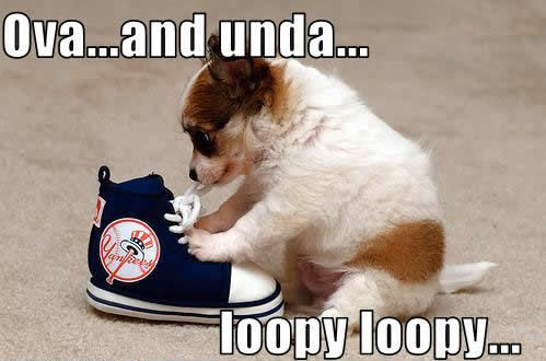 Pictures Puppies on Funny Puppy     Puppies Photo  13009283    Fanpop Fanclubs