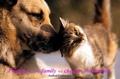 Friendship - yorkshire_rose photo