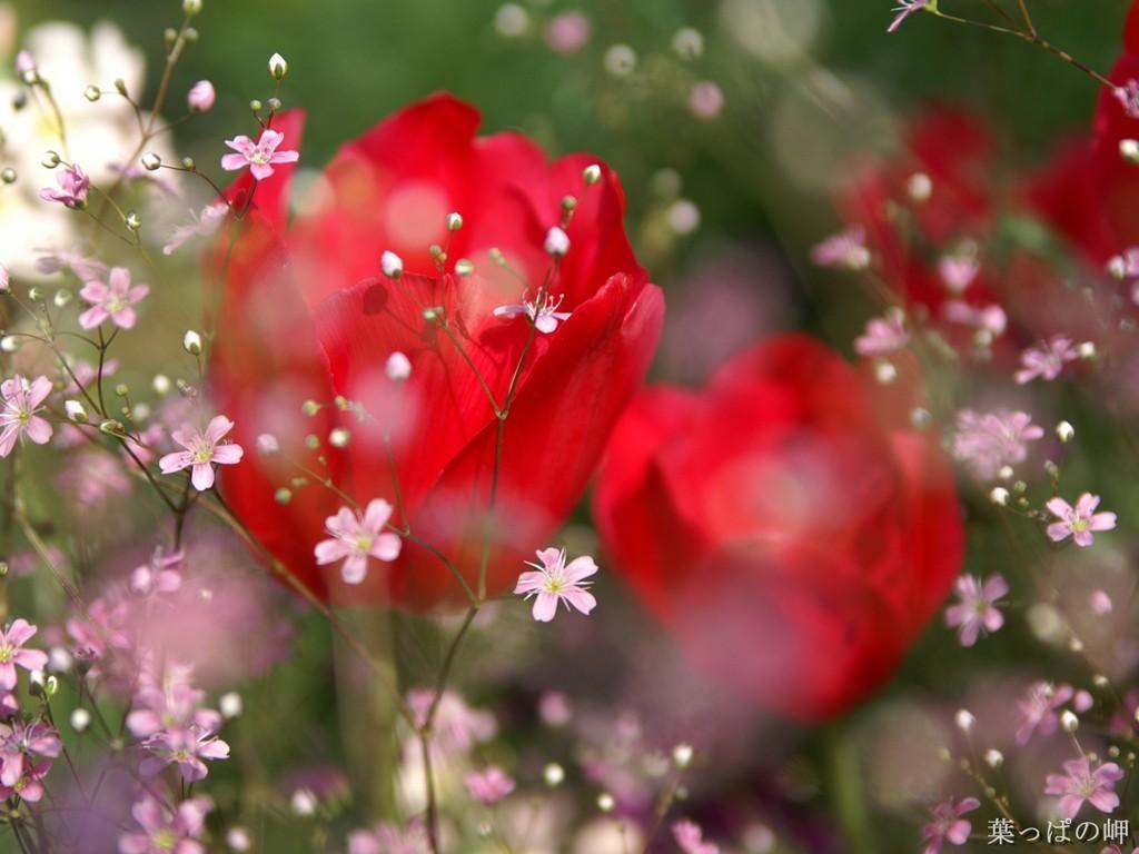Red Roses - Roses Wallpaper (13004509) - Fanpop