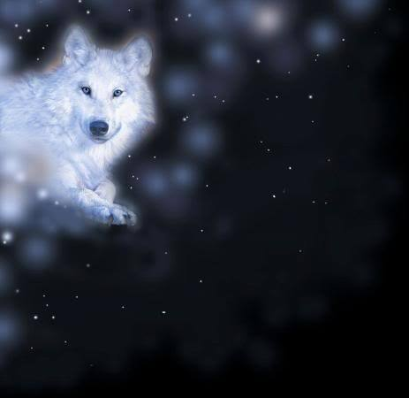 Snow بھیڑیا