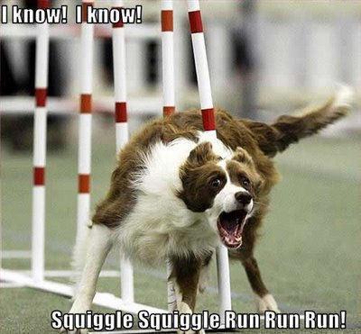 lol......dogs !!
