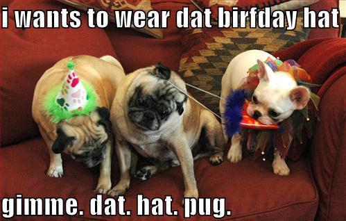 lol.....dogs !