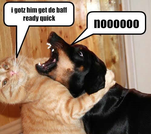 lol.....dogs !!