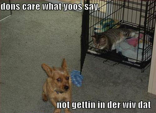 lol...dogs !!