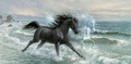 Black Stallion Painting - the-black-stallion photo