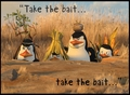 Take The Bait!  - penguins-of-madagascar photo
