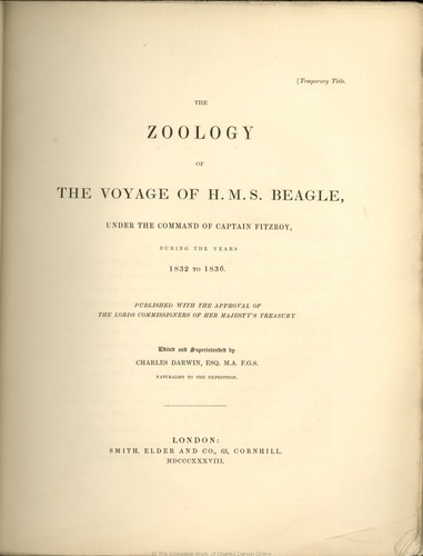 The Zoology of the Voyage of H.M.S. 小猎犬, 比格犬