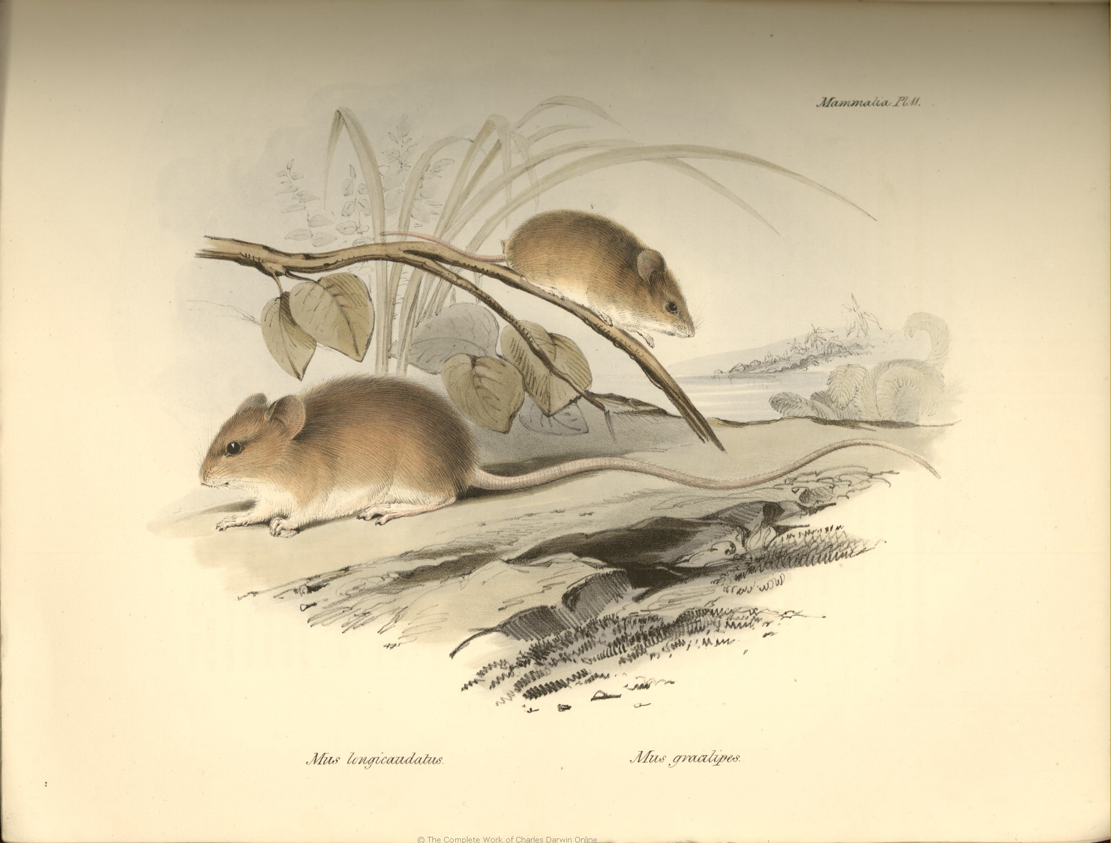 Charles Darwin images The Zoology of the Voyage of H.M.S ...