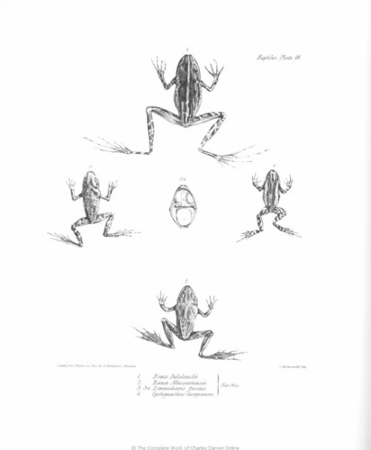 The Zoology of the Voyage of H.M.S. chó săn nhỏ, beagle