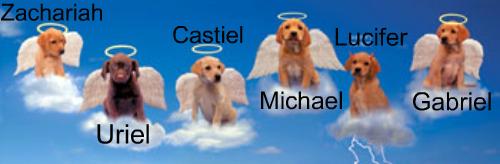 ángel cachorritos