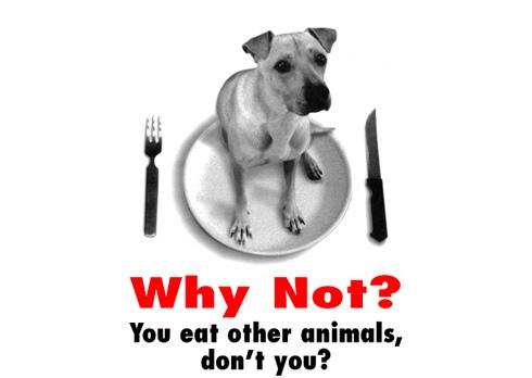 Rechte für Tiere