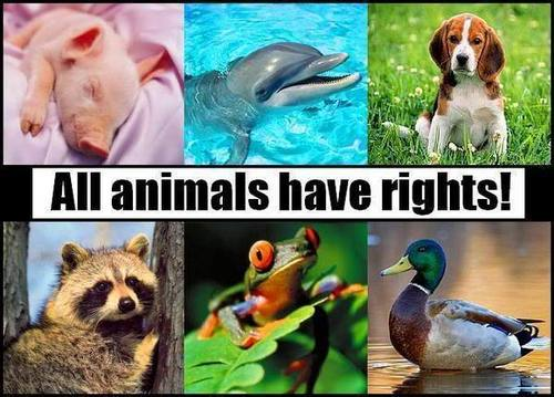 Animal Rights wallpaper titled Animal Rights