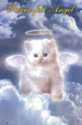 Berni = Purrfect malaikat