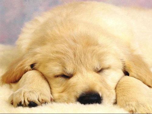 Cute Dog !