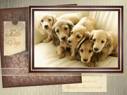 Cute cachorros