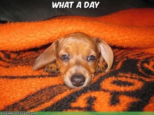 Cute / Funny कुत्ता !!