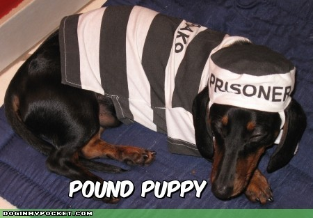 Cute / Funny chiens !!