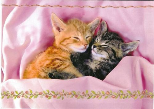 Cute Kittens - kittens Photo