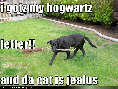 Funny chiens