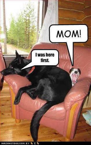 Funny cachorros