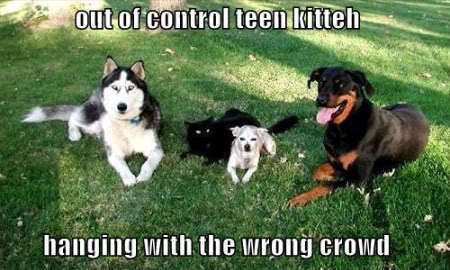 Funny chiens :)