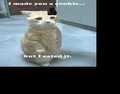 NORI (cat version) ATE MY COOKIE