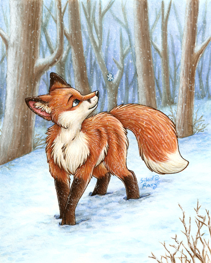 Red foxes images red fox hd wallpaper and background photos 13291540