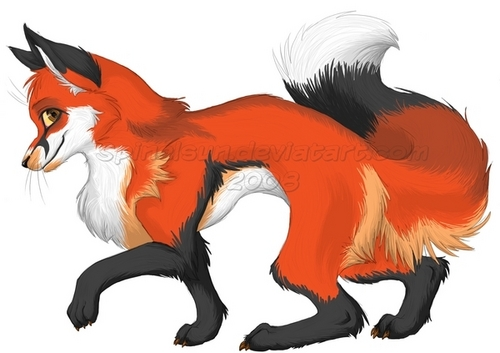 Red zorro, fox