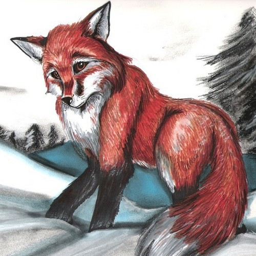 Red vos, fox