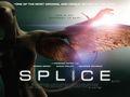 Splice - splice photo