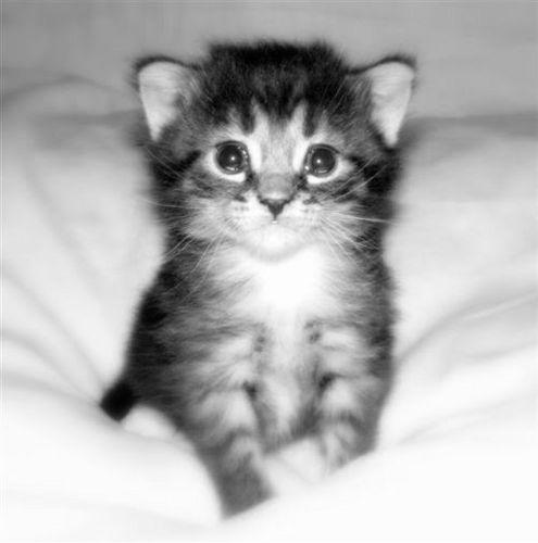 Sweet 小猫