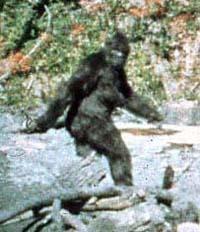 baby bigfoot, bigfoot, bigfoot, bigfoot, tracks, tracks, yeti