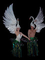 swan costumes