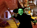 Bush the Wicked Witch