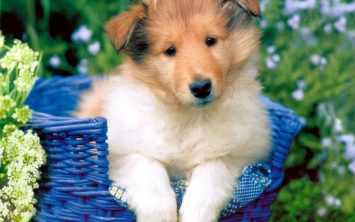 Puppies wallpaper titled Cute Puppy