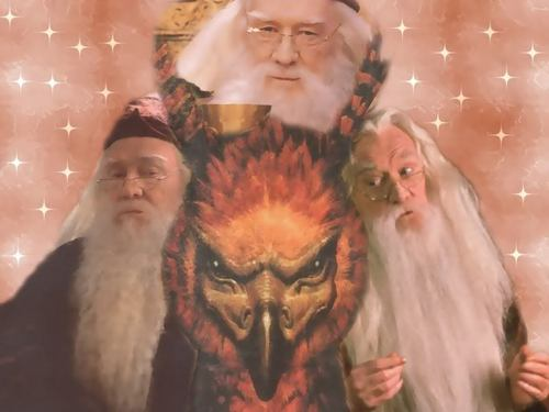 Dumbledore fond d'écran from me