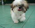 Lovely 狗