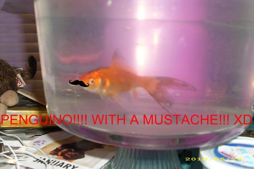 Penguino wit a mustache!!!