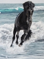 The black stallion in water painting - the-black-stallion photo