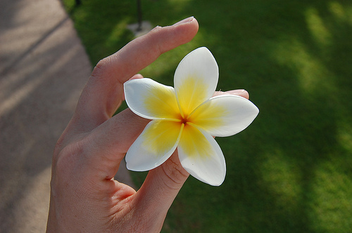 The most perfect plumeria just for bạn <3