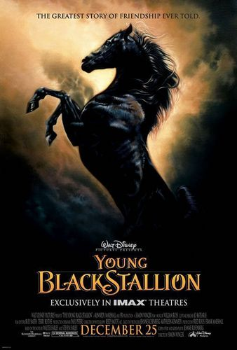 The young black stallion - the-black-stallion Photo