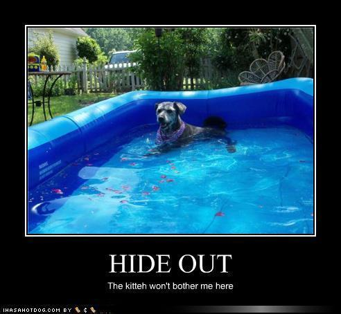 lol.....dogs