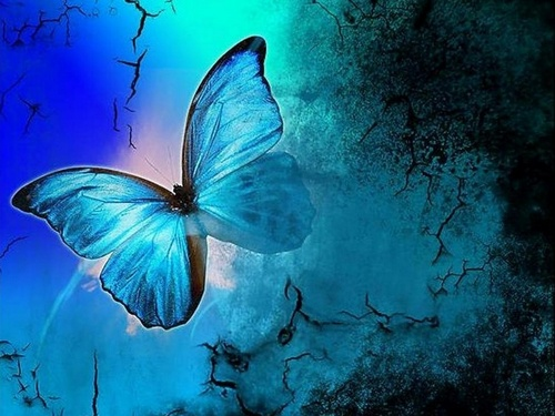 Shades Of Blue - butterflies Wallpaper