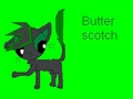 Buttersotch as a cat