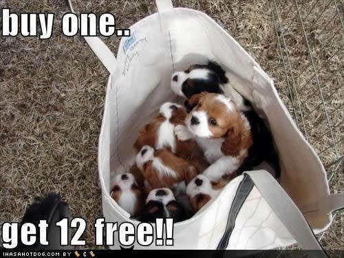Buy One Get 12 Free !!