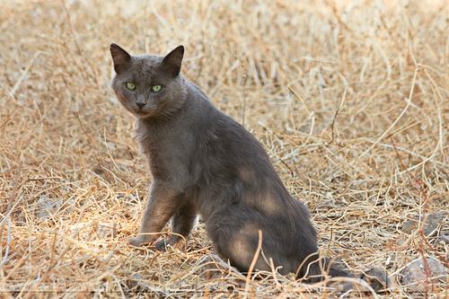 Cats(=