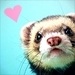 Ferret Love - ferrets icon