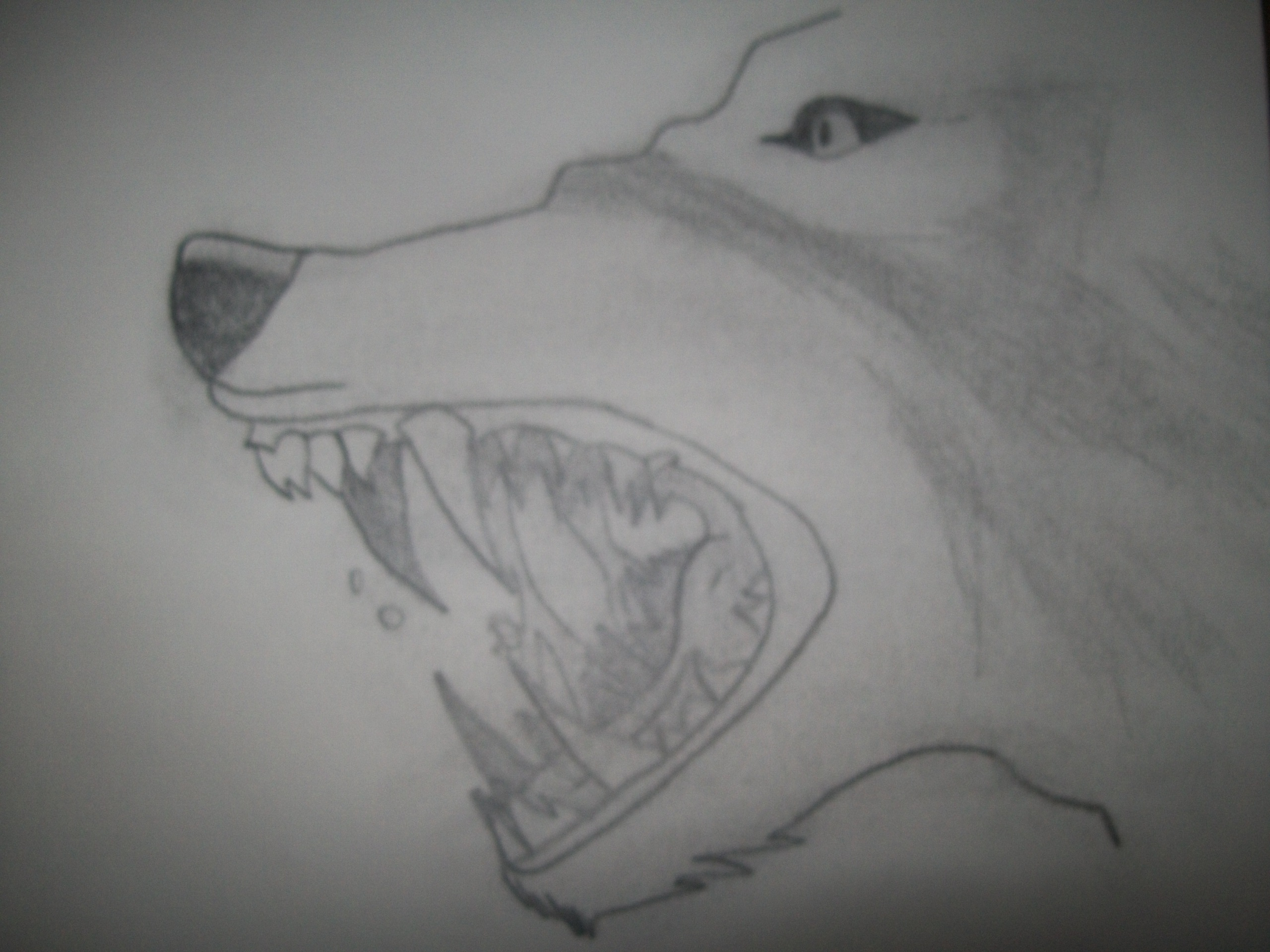 Art Animal Drawing Anime Wolves my Drawing