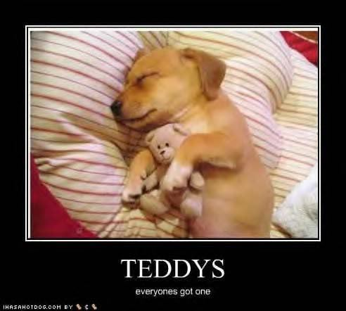 Puppy and teddy - puppies Photo