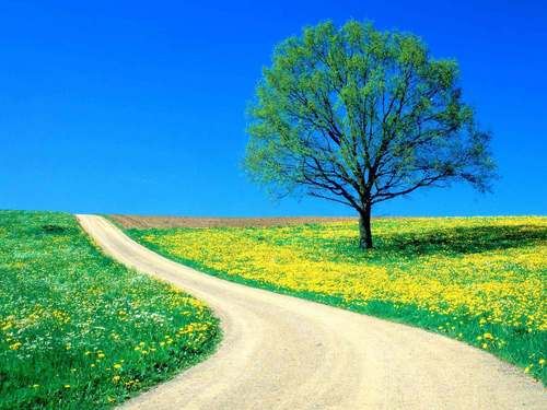 beautiful Spring دن on a country road